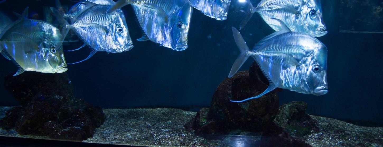 Oceanographic Museum of Monaco Image 7