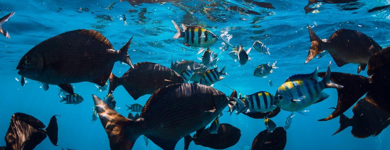The Aquarium at O'Brien's Cay Image 3