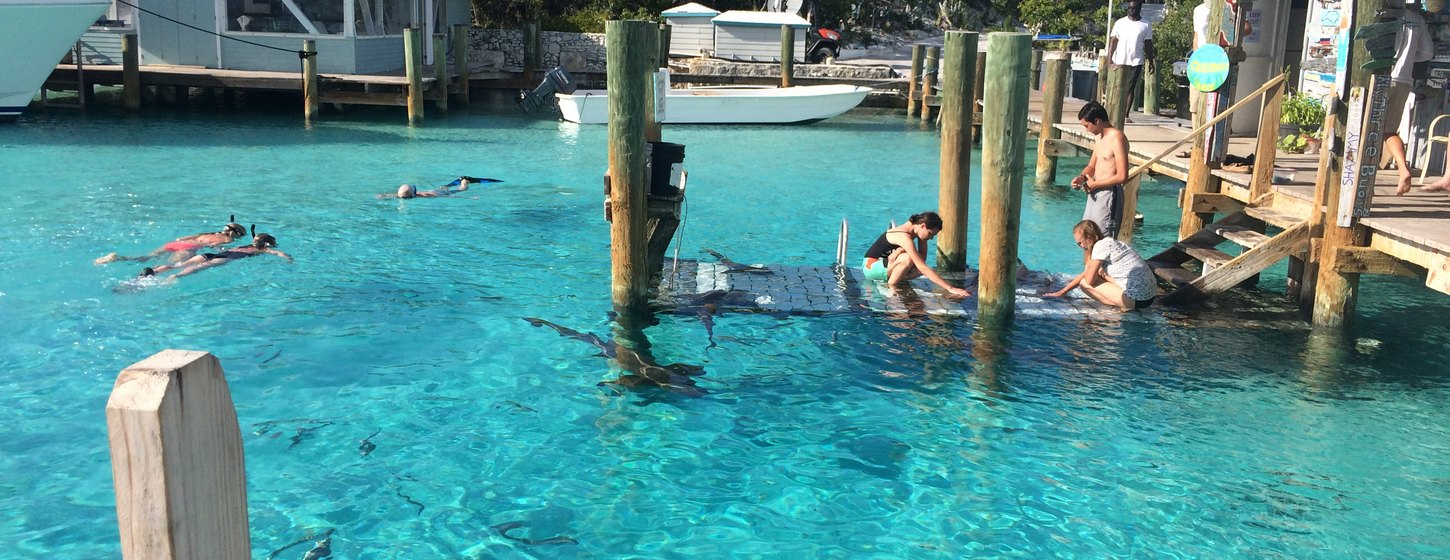 The nurse sharks of Compass Cay Image 3