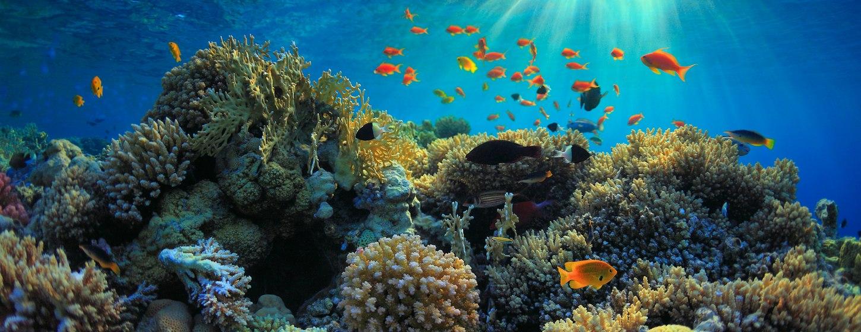 The Aquarium at O'Brien's Cay Image 1