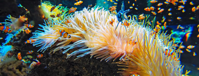 Oceanographic Museum of Monaco Image 6