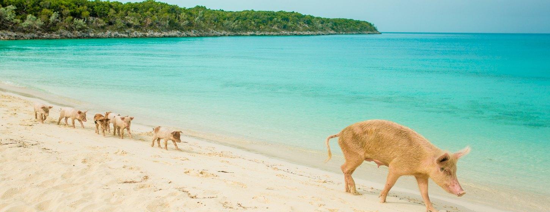 Pig Beach Image 4