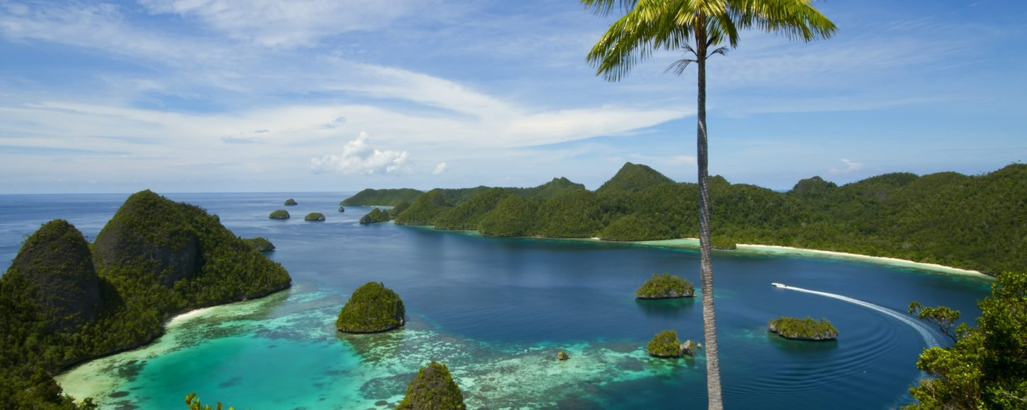 Aerial view of the Raja Empat Islands with palm tree in foreground