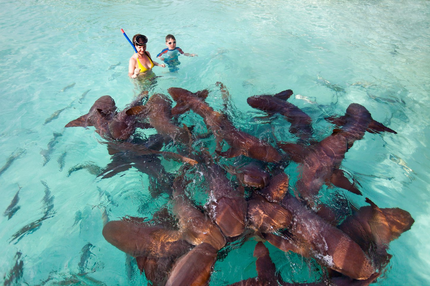The nurse sharks of Compass Cay , Bahamas | Yacht Charter Fleet