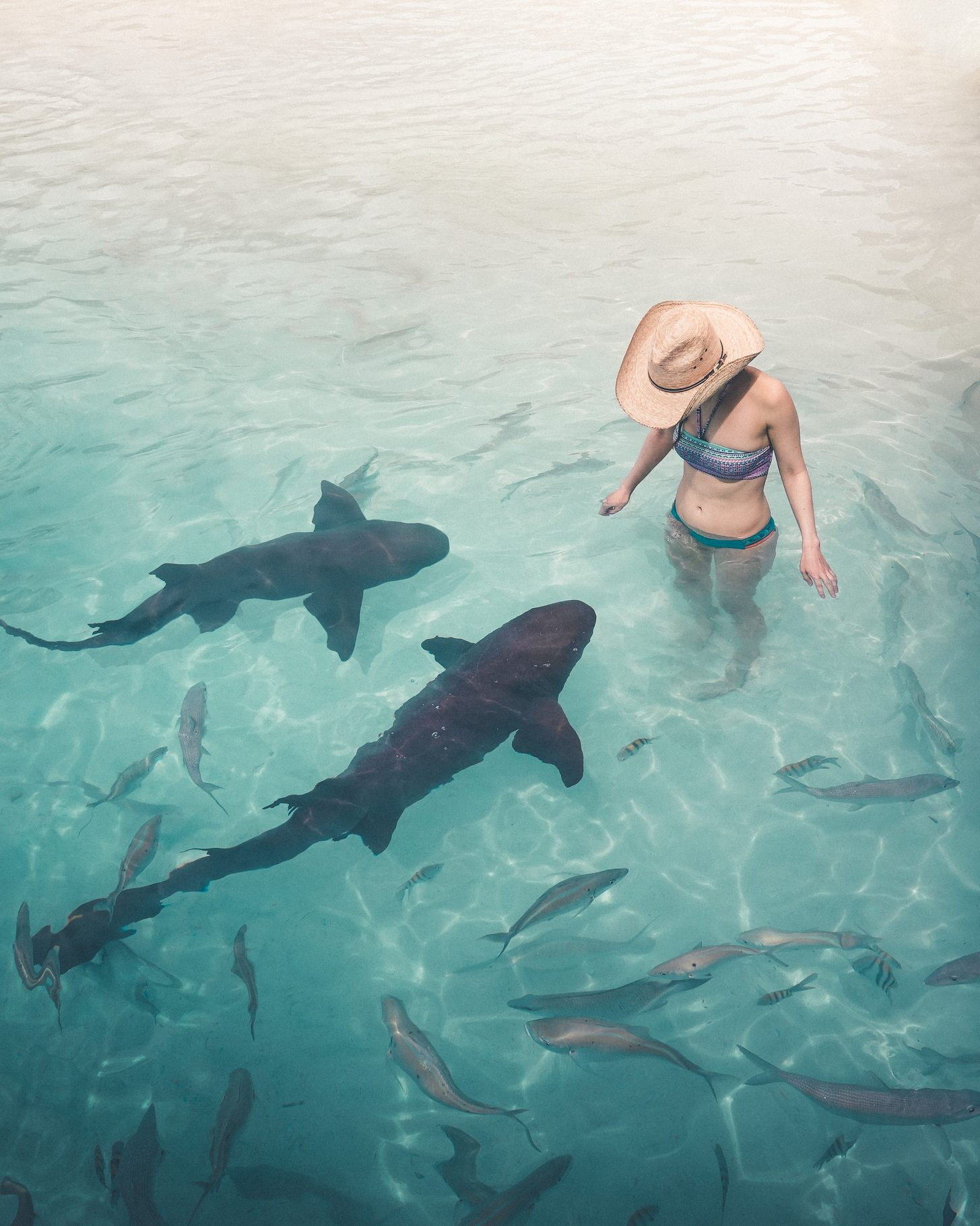 The nurse sharks of Compass Cay Image 3