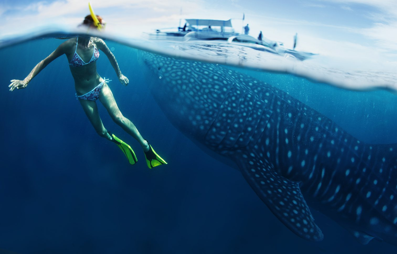 Swimming with whale sharks Image 1