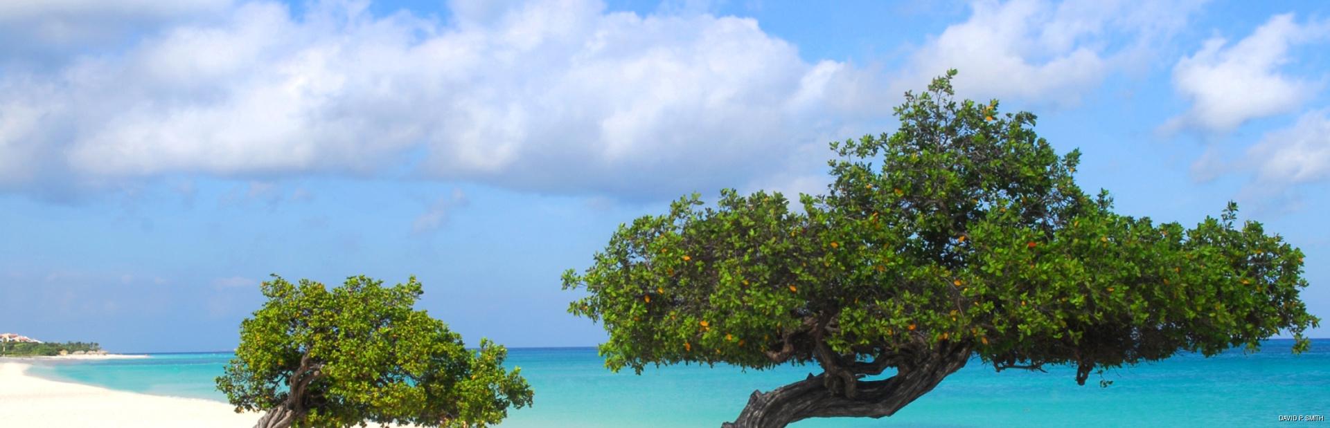 Trees on the empty white beach