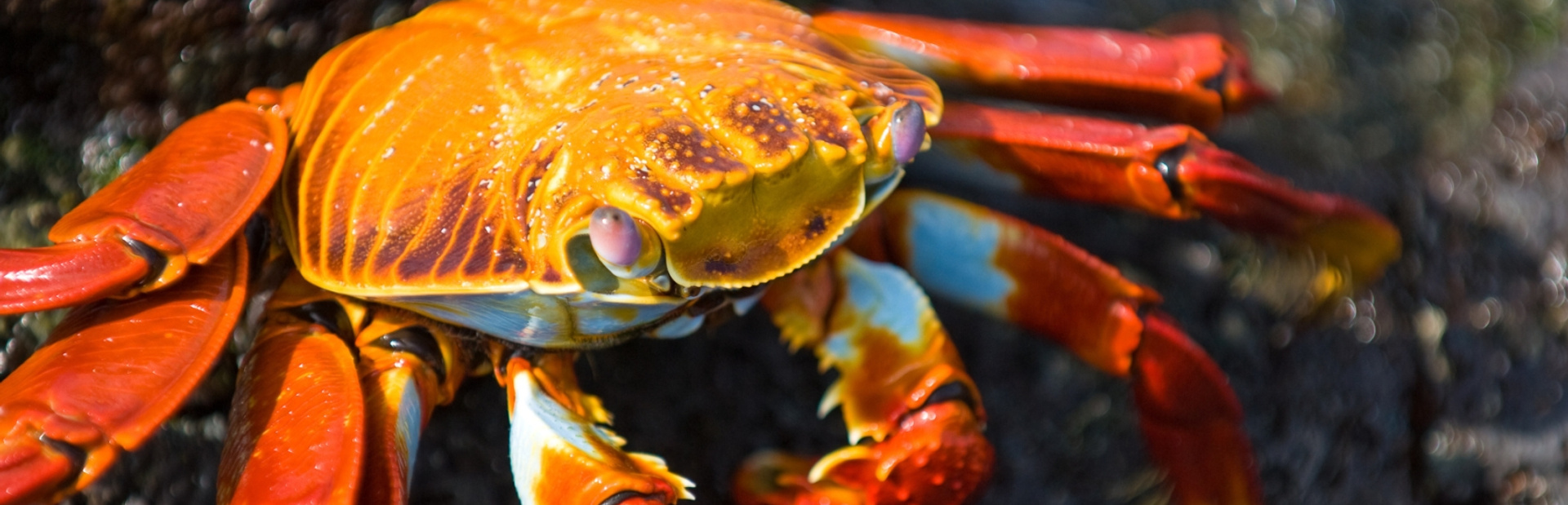 Galapagos Islands news photo