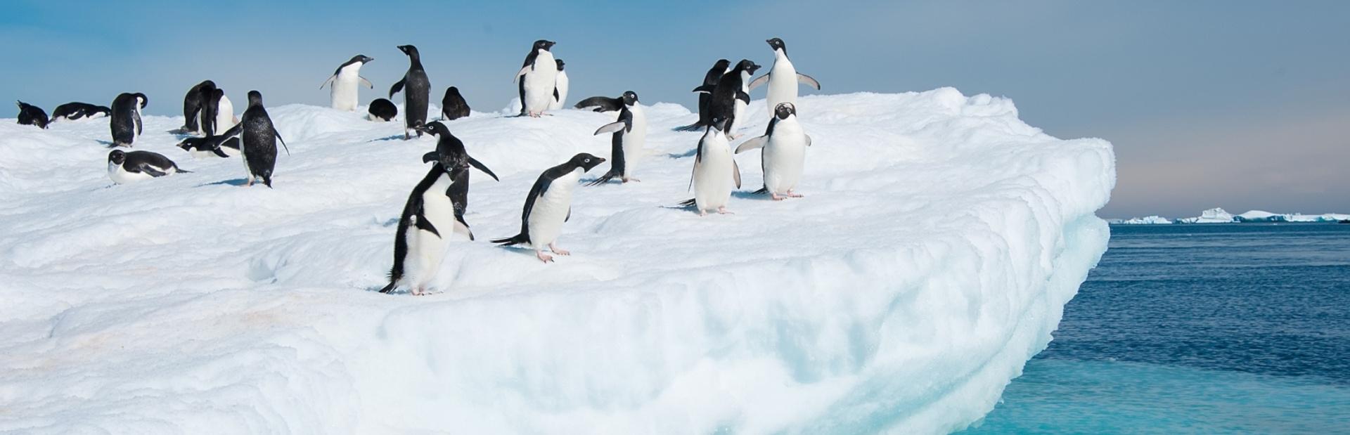 Antarctica news photo