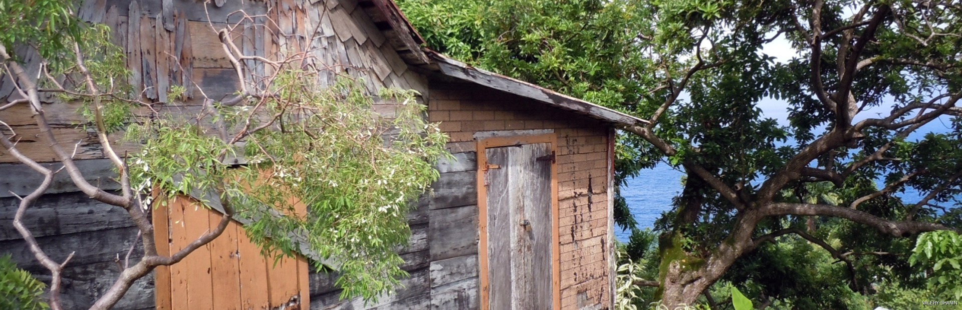 Old wooden house surrounded by green