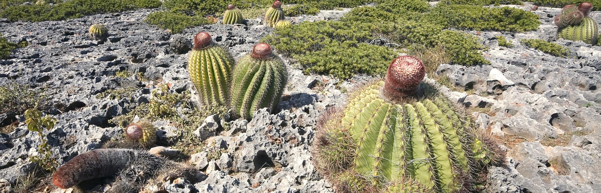 Anguilla news photo