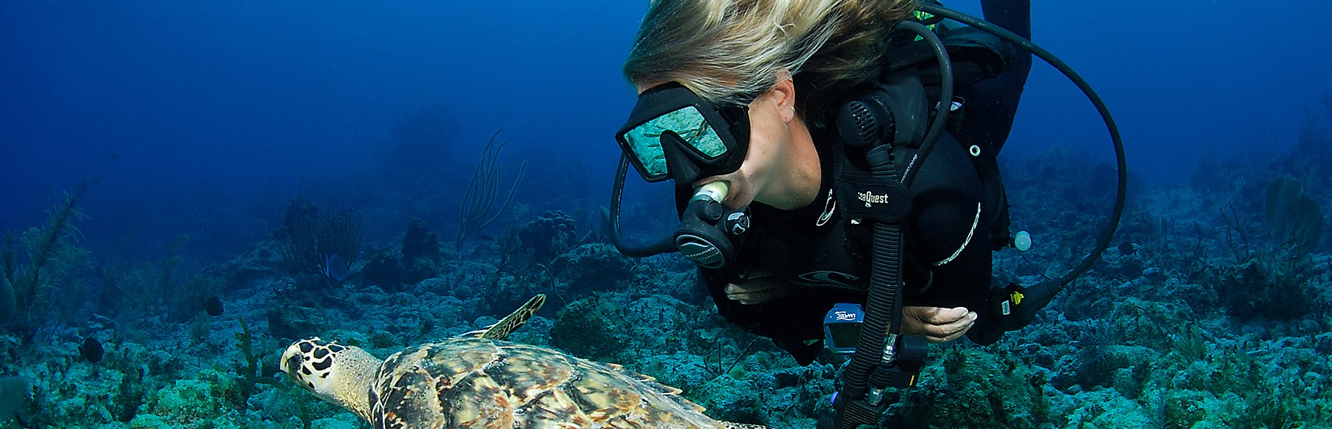 Five of the Best Dive Sites in Komodo National Park to Visit on a Luxury Yacht Charter