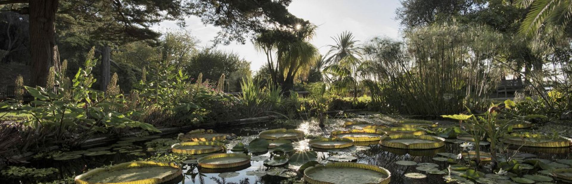 The Val Rahmeh Exotic Garden Image 1