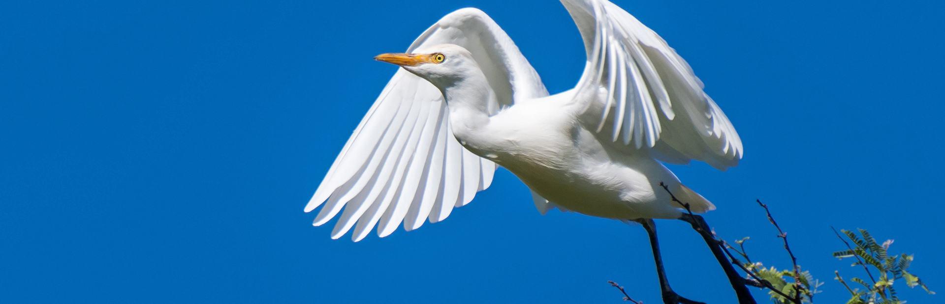 Thanda Bird Walk Image 1