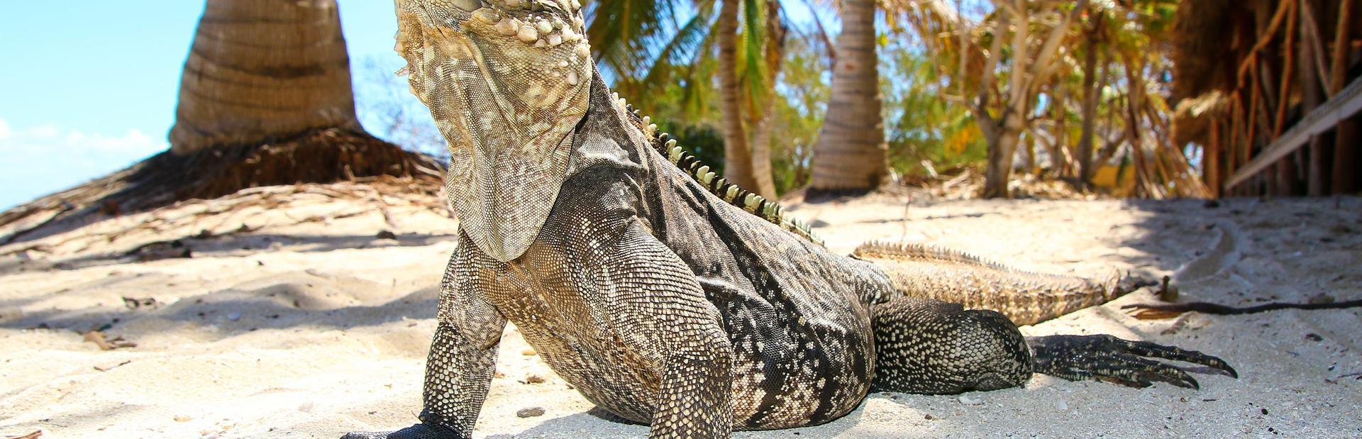 Iguana Beach Image 1
