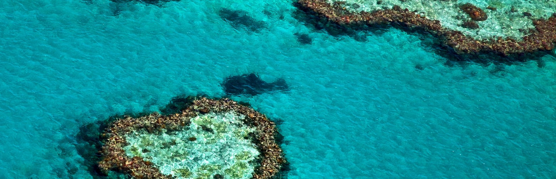 Great Barrier Reef photo tour