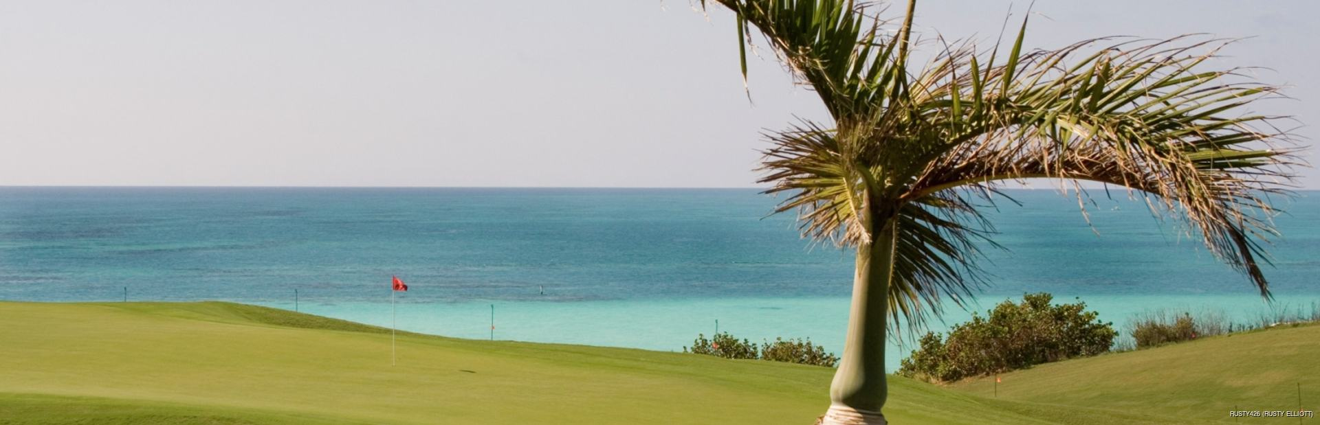 Palm tree on Golf Course