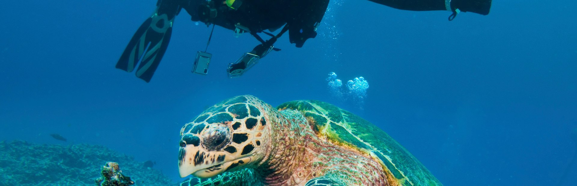 Great Barrier Reef inspiration and tips