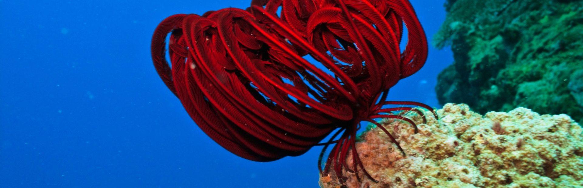 Egypt & Red Sea climate photo