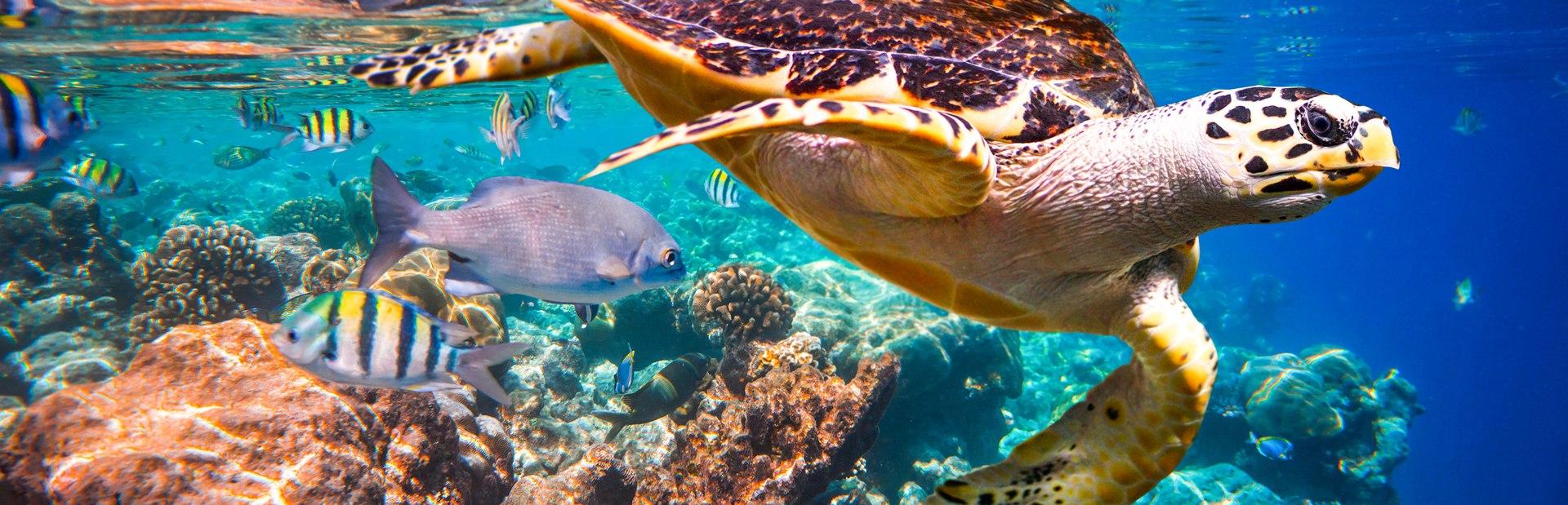 Maldives photo tour
