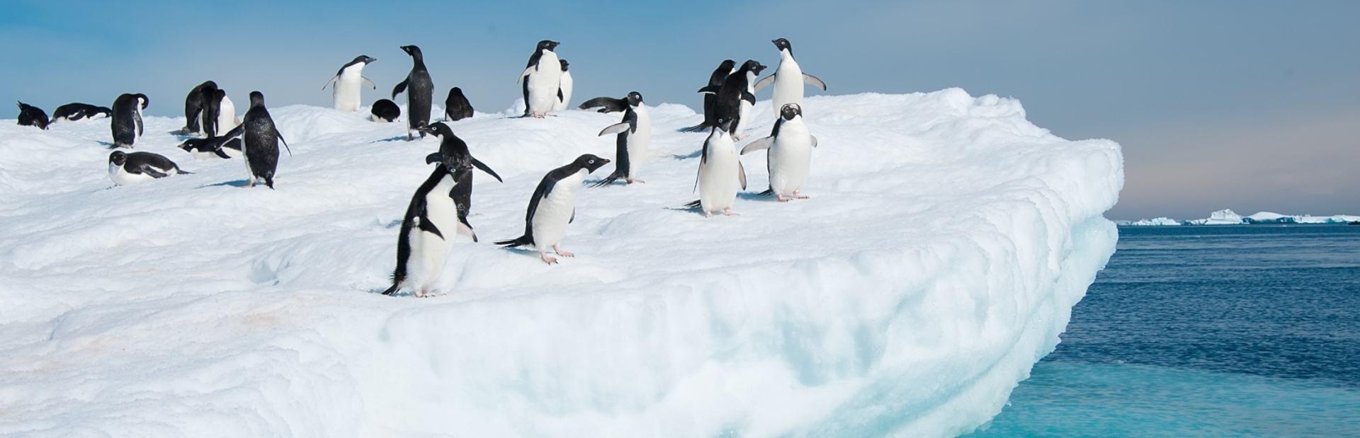 Antarctica interactive map