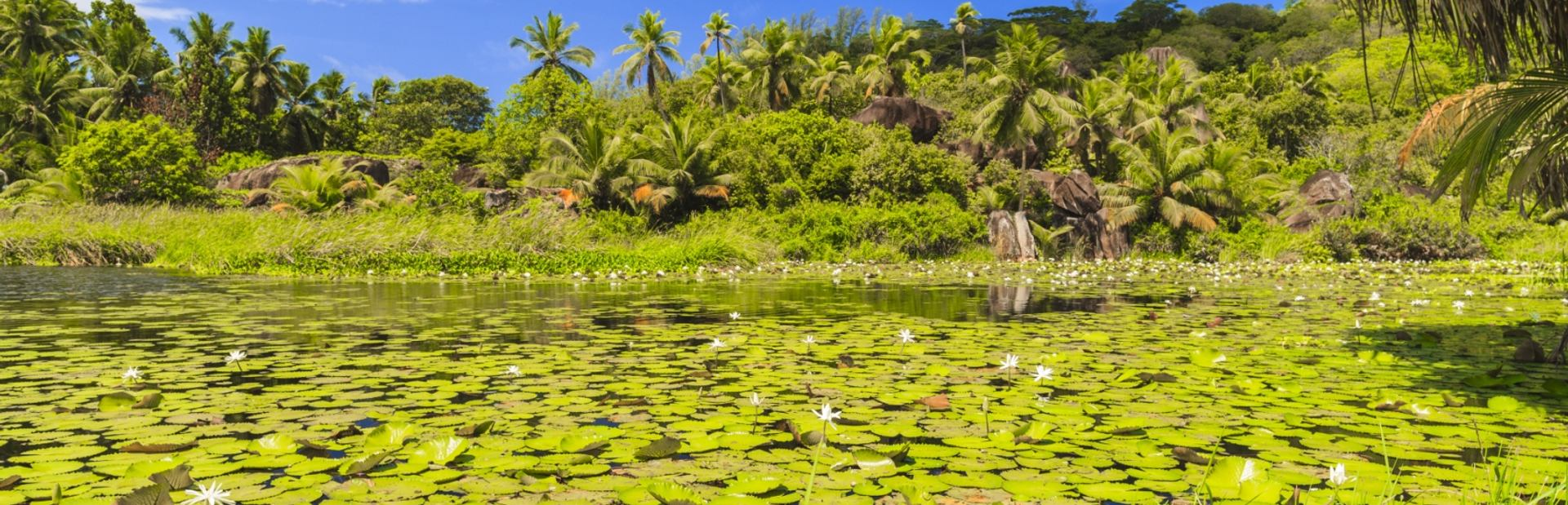 Admire the Lily-filled Lagoon of Mahe