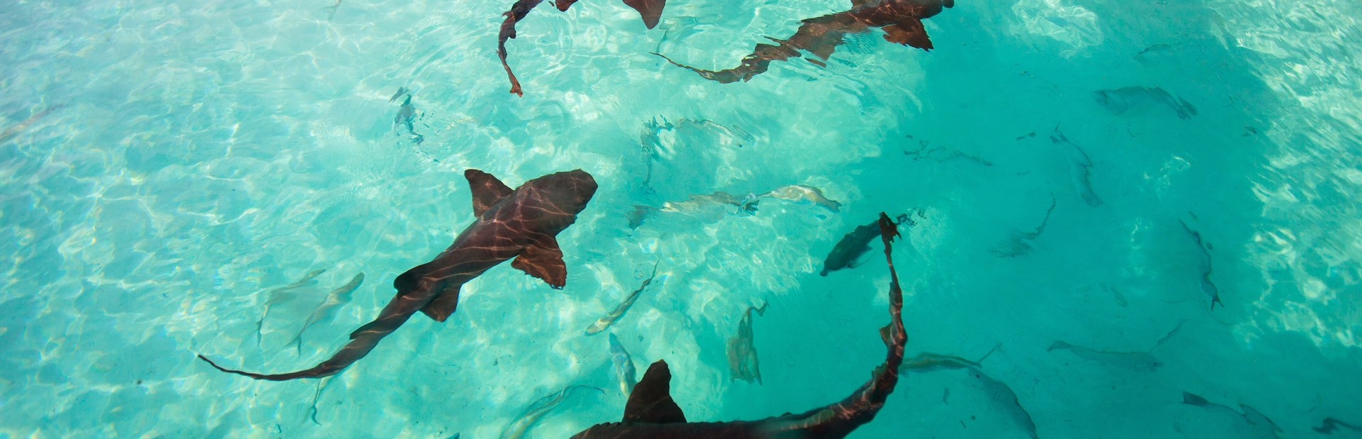 Things to see & do in the Bahamas