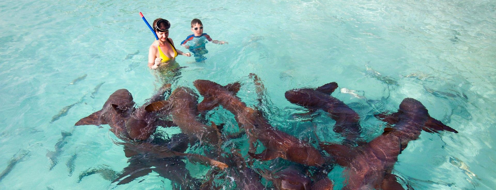 The nurse sharks of Compass Cay Image 1