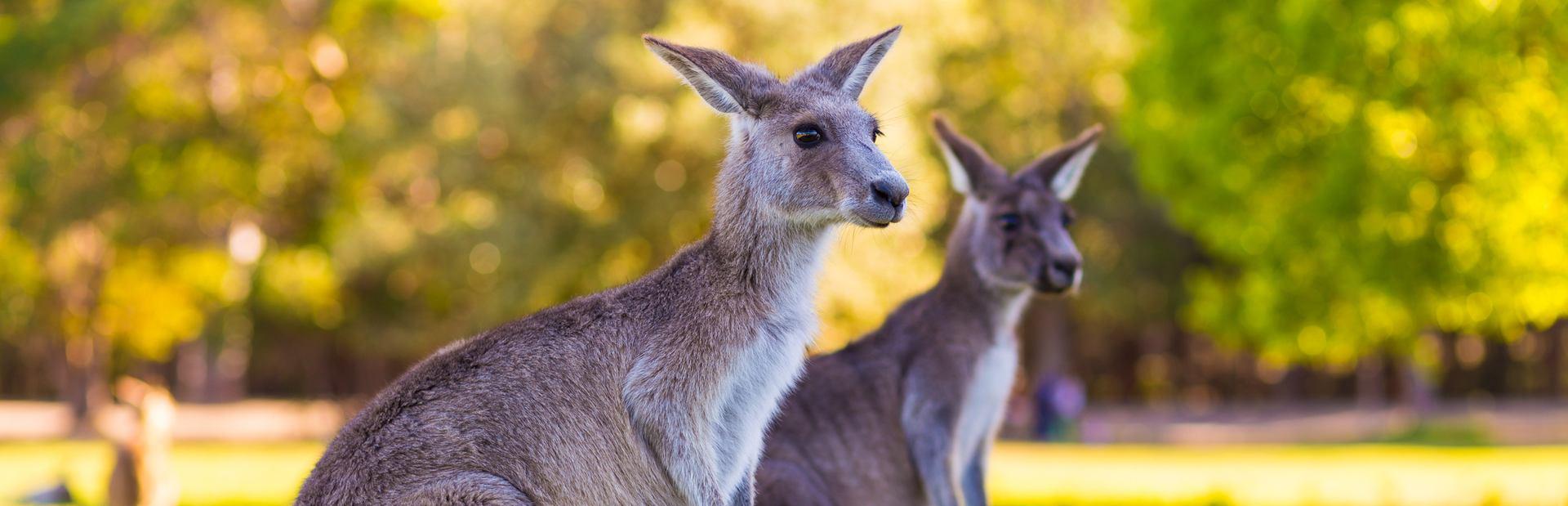 Australia photo tour