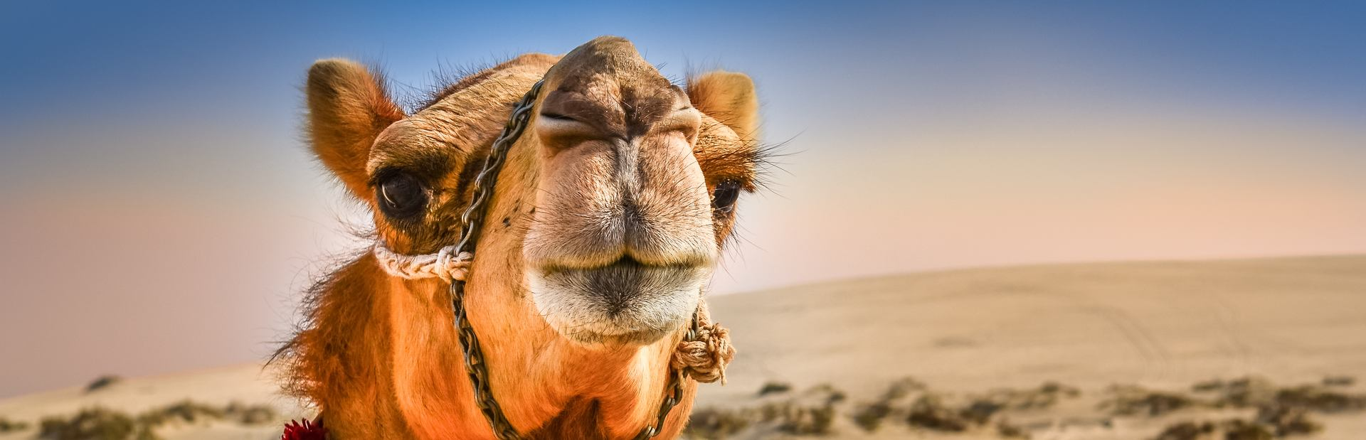 Abu Dhabi charter itineraries