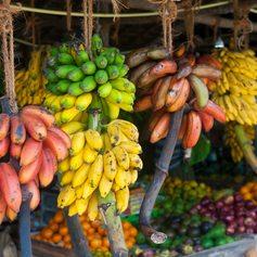 Sri Lanka photo 10