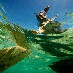 Madagascar Boatman
