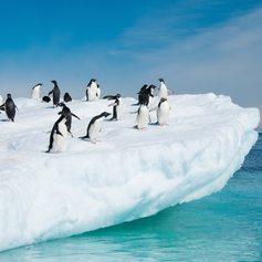 Antarctica photo 6