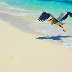 See the Spectacular Wildlife of the Maldives