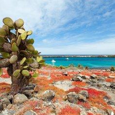 Galapagos Islands photo 30