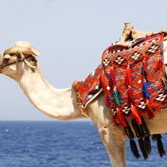 Egypt & Red Sea photo 4