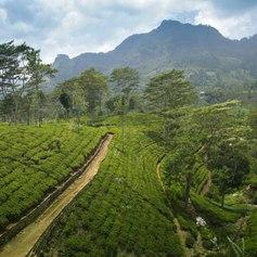 Sri Lanka photo 18