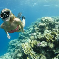 Explore the Coral Reefs of the Bahamas