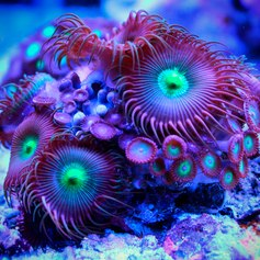 Great Barrier Reef photo 13