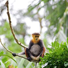Monkey sitting on the tree in the forest
