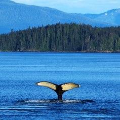 North America photo 4