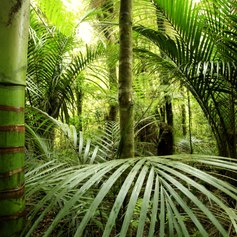 Discover New Zealand's Largest and Oldest Trees in Waipoua Forest