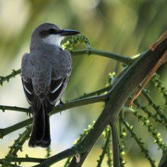 A bird watcher's paradise