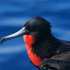 Galapagos Islands photo 23