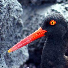 Galapagos Islands photo 19