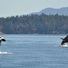 British Columbia photo 12