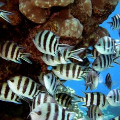 Meet Magical Schools of Fish in the Maldives