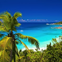 View on the beautiful beach from behind the palm tree