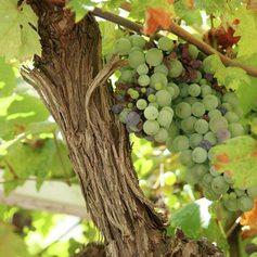 Sip on Montenegrin Wine in the Mediterranean Sunshine