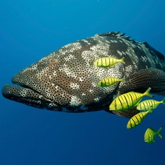 Great Barrier Reef photo 28